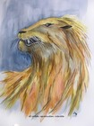 aquarelle graziella gd artiste portrait animal lion